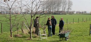 foto van de omslag. mensen die buiten in een grasveld staan en bomen aan het snoeien zijn