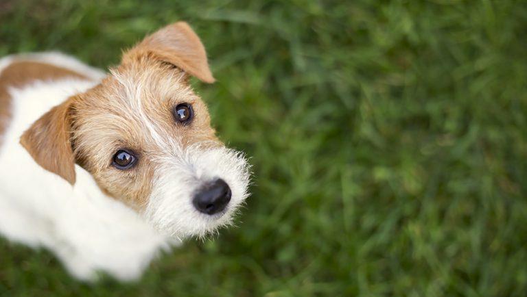 een hond die naar boven kijkt in het gras